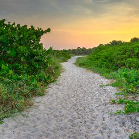 Sandy pathway surrounded by sea grapes and foliage